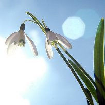 Весна- время начать новую жизнь